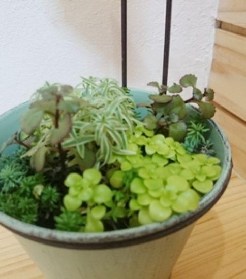 植物が新たに増えました